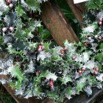 Comment utiliser le gui et le houx en décoration de Noël