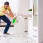 solutions pour exterminer les fourmis dans une maison