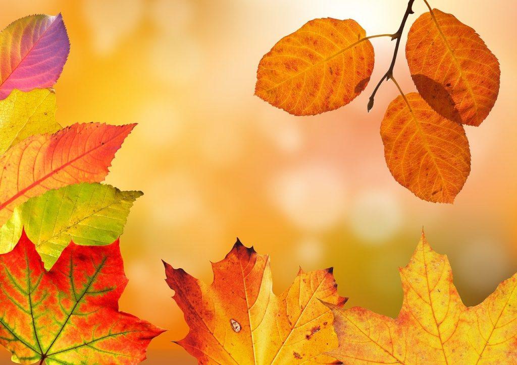 Pourquoi ramasser les feuilles mortes ?