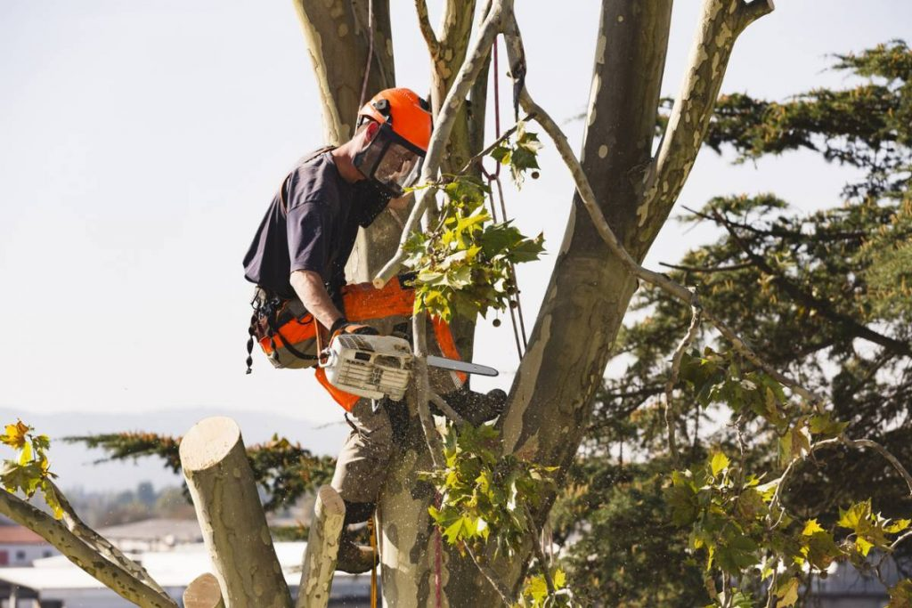 Climat méditerranéen : quand élaguer ses arbres ?