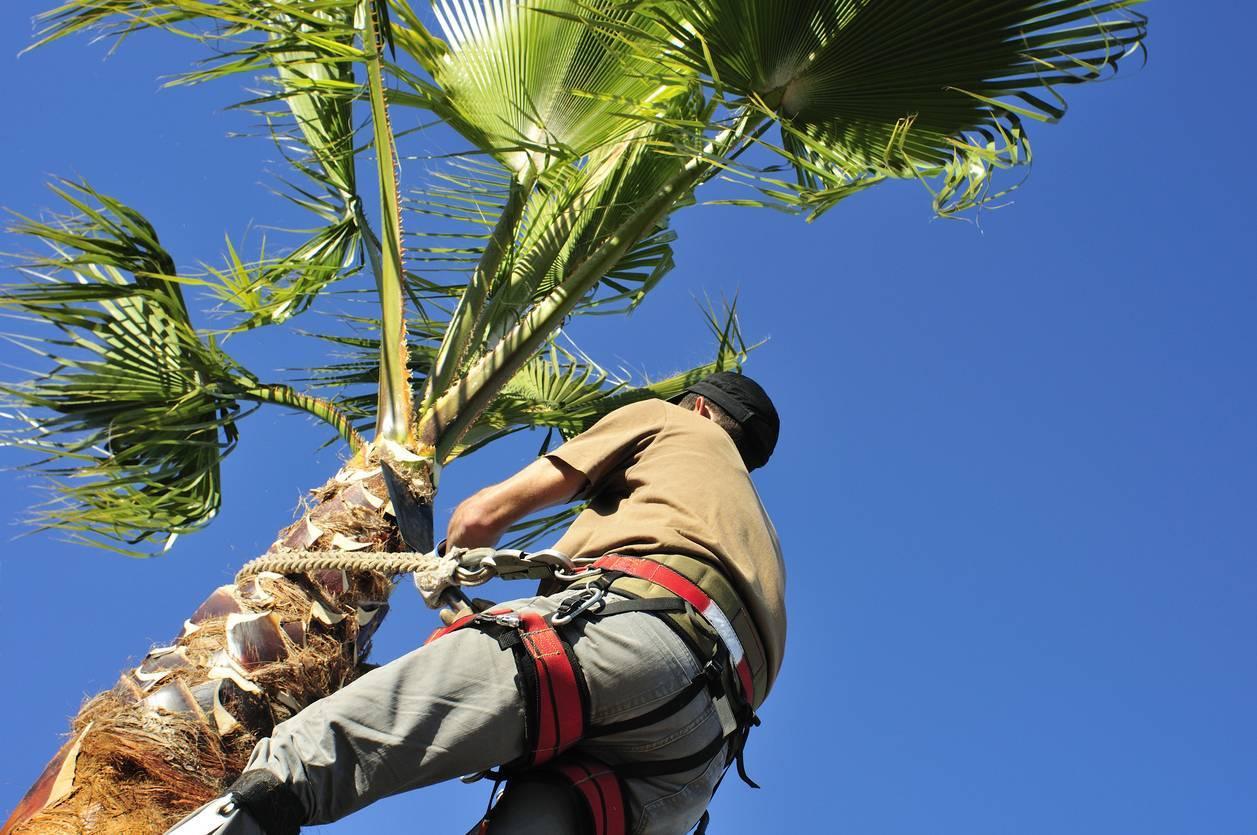 élagage d'arbre jardinier paysagiste