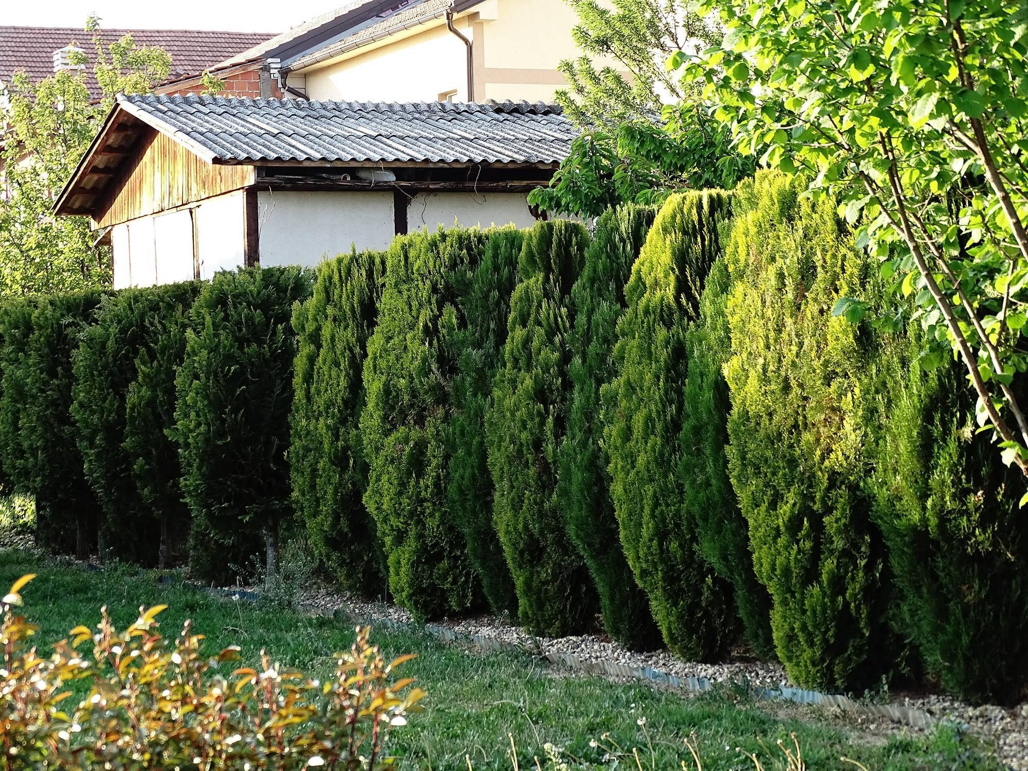 clôture haie sécurisation jardin terrain